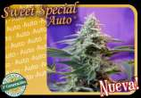 Sweet Special Auto