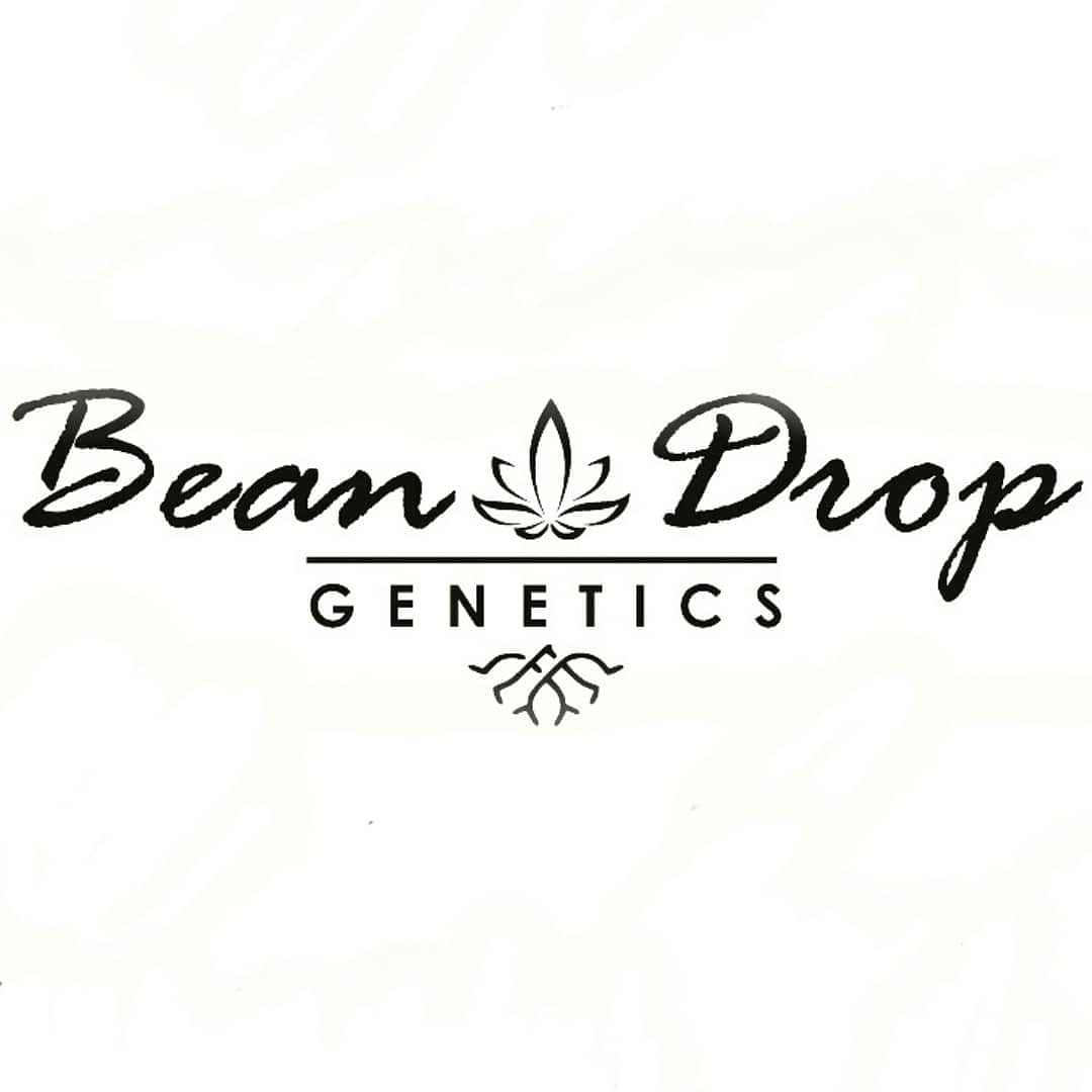 Logo Bean Drop Genetics