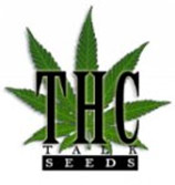 Logo Team THCtalk Seeds
