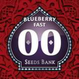Blueberry Fast