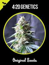 420 Genetics Power Plant