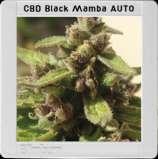 Black Mamba Auto CBD
