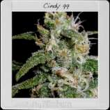 Cindy\'s 99
