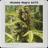 Mamba Negra Auto