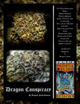 Dragons Flame Genetics Dragon Conspiracy