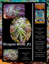 Dragons Flame Genetics Dragons Stash
