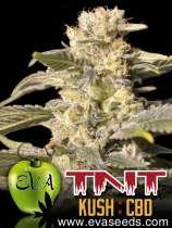 TNT Kush CBD