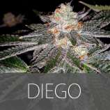 Exclusive Seeds Diego