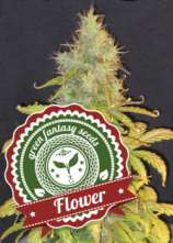 Green Fantasy Seeds Auto Flower