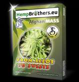 Hempbrothers Afghan Mass