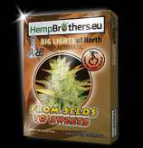 Hempbrothers Big Lights of North Automatic