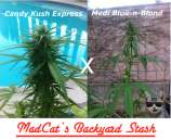 MadCat's Backyard Stash Medi Candy Express