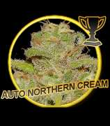 Auto Northern Cream