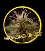 Mr. Hide Seeds Auto WinWeed CBD