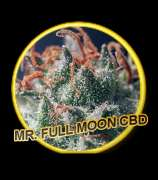 Mr. Hide Seeds Full Moon CBD