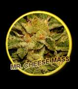 Mr. Hide Seeds Mr. Cheese Mass