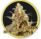 Mr. Hide Seeds Mr. Mango Crack