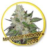 Mr White Widow +