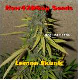 New420Guy Seeds Lemon Skunk