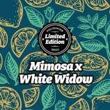 Mimosa x White Widow