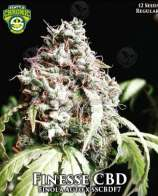 Seattle Chronic Seeds Finesse CBD