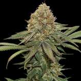 SeedStockers Fruit Cake
