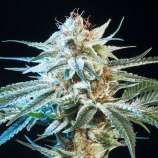 Seeds66 Alien Technology