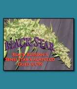 SnowHigh Seeds Black Star