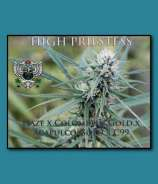 SnowHigh Seeds High Priestess