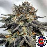 The Fire Department Coconut OG