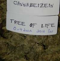 Cannabeizein Tree of Life - photo réalisée par ErnestCharsi